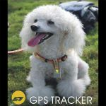traceur GPS animaux
