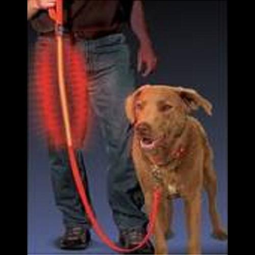 laisse lumineuse pour chien pic2