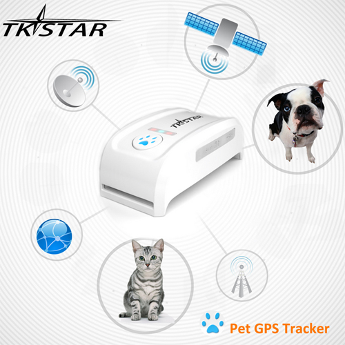 traceur gps collier chien pic2